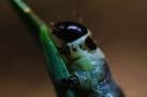 гусеница (листовертка)