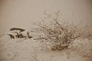 Снежные могилы